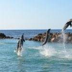 Dolphins in Florida